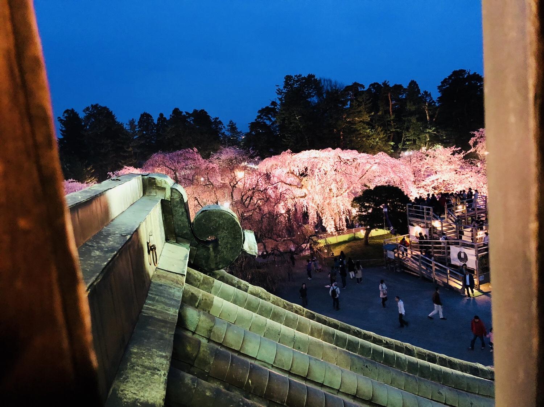 弘前城から夜桜を眺めたところ