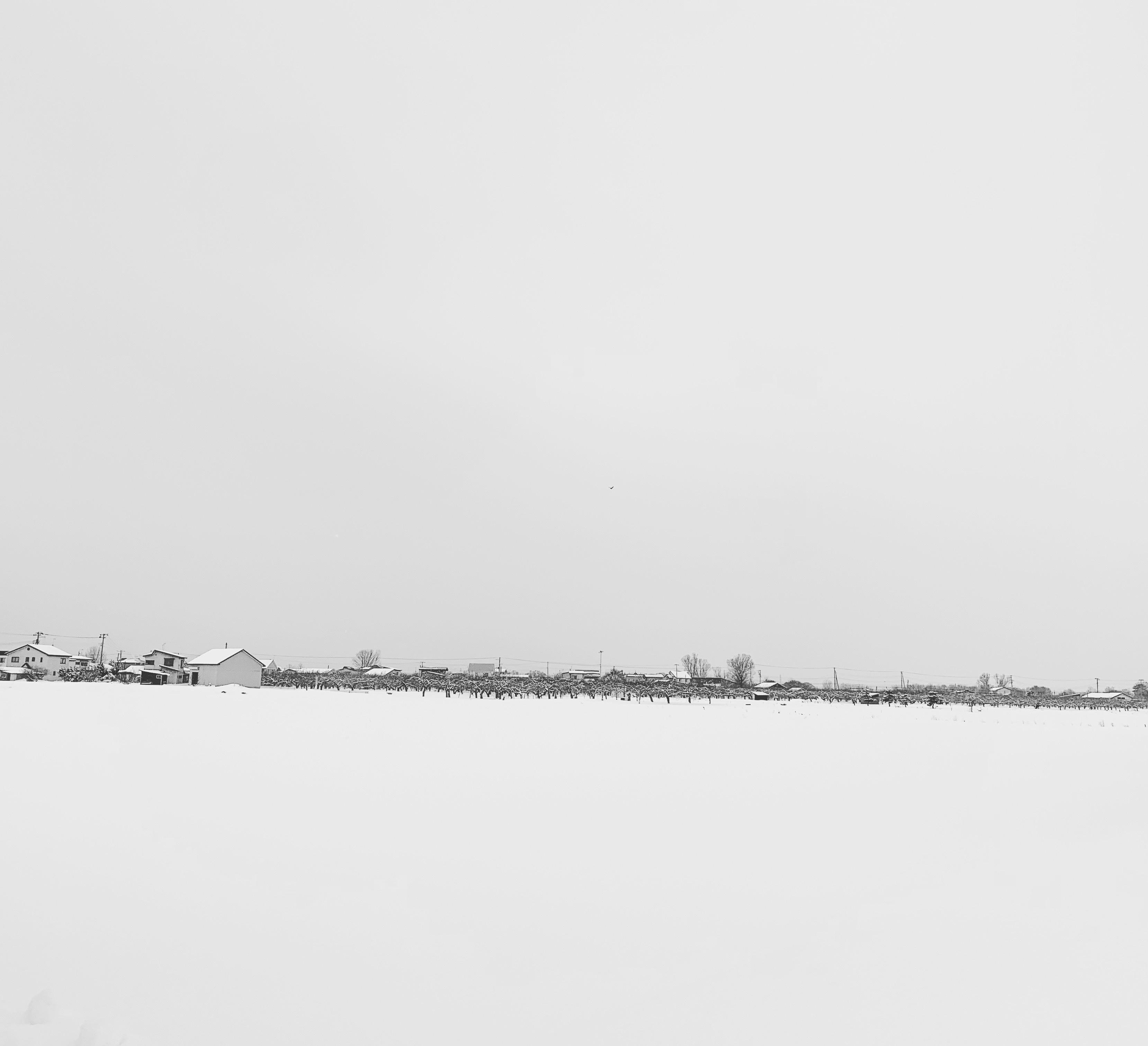 近所の雪景色